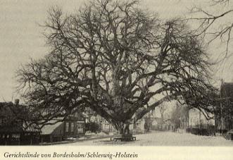 gerichtslinde-bordersholm-schleswig-holstein.jpg